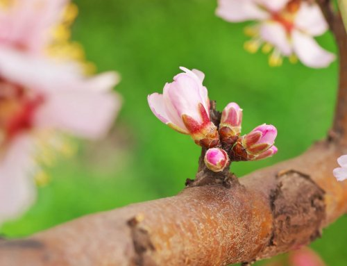 Gestão do solo e emissões de gases em amendoais biológicos